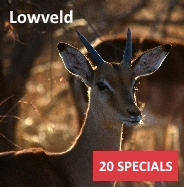 Specials - Lowveld