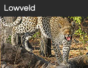 Lowveld
